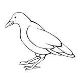 Иллюстрация черноты птицы вороны белым изолированная вороном Стоковые Фотографии RF