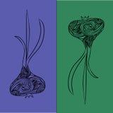 Иллюстрация чеснока Стоковое Изображение