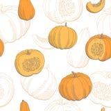 Иллюстрация эскиза картины графика цвета тыквы безшовная Стоковые Изображения