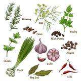 Иллюстрация эскиза полного цвета реалистическая кулинарных трав и специй бесплатная иллюстрация