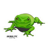 Иллюстрация лягушки Стоковое Изображение RF