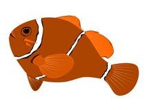 Иллюстрация anemonefish Spinecheek Стоковое Изображение