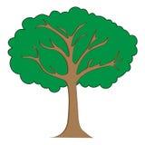 Иллюстрация clipart дерева Стоковая Фотография RF