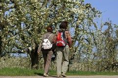Идя женщины и деревья с цветениями в Betuwe Стоковое Изображение RF