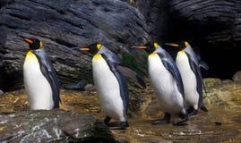 Идя король пингвины Стоковое Изображение