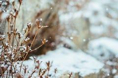 Идя снег день стоковые изображения rf