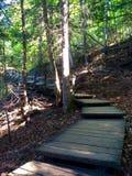 Идя шаги в древесину Стоковые Изображения