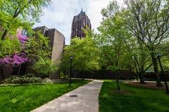 Йельский университет в New Haven Коннектикуте Стоковая Фотография