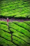 Йога в плантациях чая Стоковое фото RF