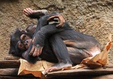 йога обезьяны Стоковые Фото