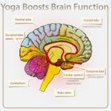 Йога поддерживает функцию мозга Стоковая Фотография