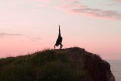 Йога утра молодой женщины Стоковые Изображения