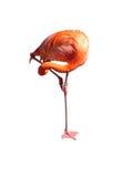 йога фламингоа Стоковое фото RF