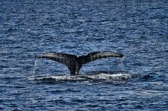 Кабель кита Стоковые Изображения RF