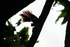 Кабель птиц стоковое изображение