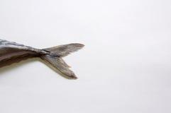 кабель рыб Стоковое Фото
