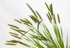 кабель травы собаки Стоковые Фото