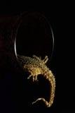 кабель gecko s Стоковые Фотографии RF