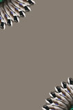 кабель mallard пера вентилятора граници Стоковая Фотография RF
