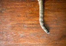 Кабель ` s кота, сер-черный на деревянной предпосылке Стоковое фото RF