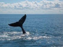 Кабель горбатого кита стоковые фотографии rf