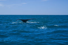Кабель кита в море Стоковые Фото