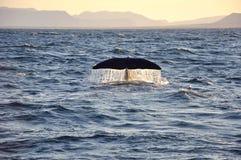 Кабель кита с водой падений Стоковое Изображение RF