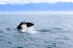 Кабель кита Стоковое Изображение