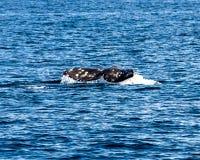 Кабель кита Стоковая Фотография RF