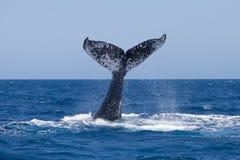 Кабель кита Стоковые Изображения
