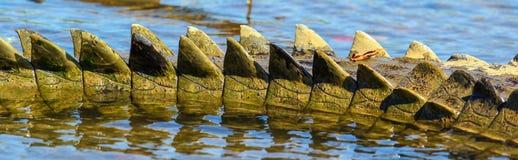 Кабель крокодила Стоковые Фото