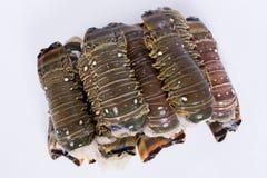 Кабель омара Стоковая Фотография