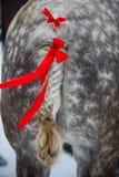 Кабель лошади и красные ленты Стоковое фото RF