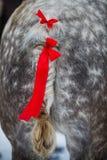 Кабель лошади и красные ленты Стоковая Фотография RF