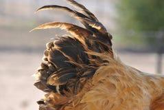 Кабель петуха Стоковая Фотография RF