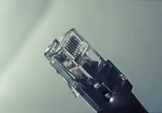 Кабель ethernet Стоковое фото RF