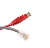 2 кабеля сети Стоковая Фотография