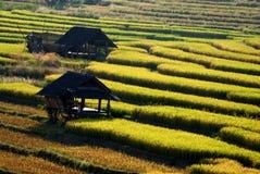Кабина в поле риса Стоковые Изображения
