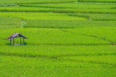 Кабина на зеленом поле риса Стоковые Фото