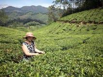 Кавказская женщина выбирая чай Стоковые Изображения