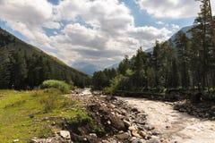 Кавказский поток горы пропуская через ущелье окружен coniferous лесом Стоковые Изображения RF