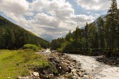 Кавказский поток горы пропуская через ущелье окружен coniferous лесом Стоковое фото RF