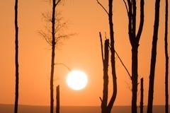 Кажется, что висит заходящее солнце с ветви дерева как блестящая идея Стоковая Фотография