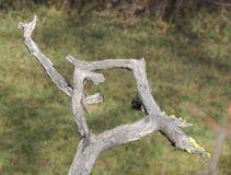 Кажется, что разговаривает эта мертвая ветвь со своими руками стоковые изображения rf
