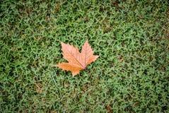 Каждый одиночный кленовый лист на свежей траве Стоковые Изображения RF