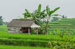 казармы в полях риса Стоковые Изображения