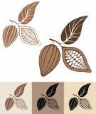 Какао Стоковые Фотографии RF