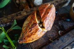 Какао на острове Гренады Стоковые Изображения RF