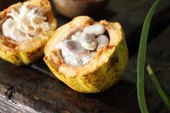 Какао на острове Гренады Стоковая Фотография RF