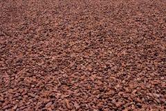 какао фасолей Стоковые Фотографии RF